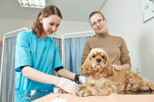 Hervey-Bay-Vet-blood-test